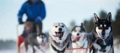 transun - husky adventures