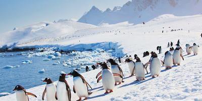 flights included on antarctica expedition - hurtigruten