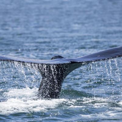 Shore Excursions - glaciers & whales
