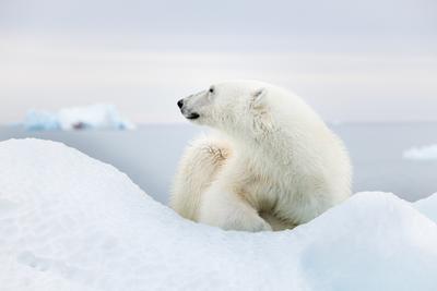 arctic 2021 - explore!