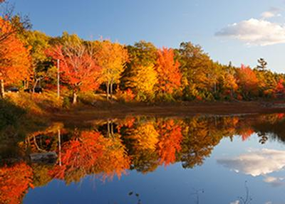 costsaver - fall colours of new england