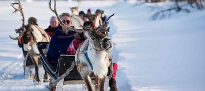 The Reindeer Of Lapland from transun tours